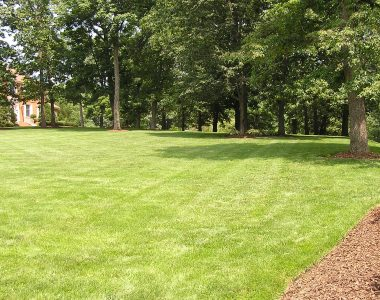 Lawn Services in Charlottesville, VA