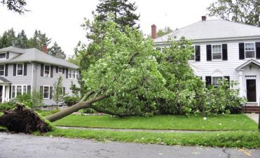 charlottesville tree service, tree removal, arborist