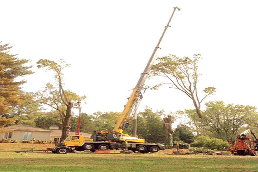 Big O Tree Gallery 2