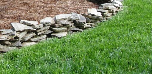 The Perfect Storm For Weeds in Your Lawn