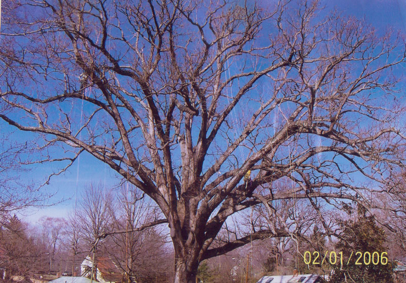 Maplewood Cemetery White Oak